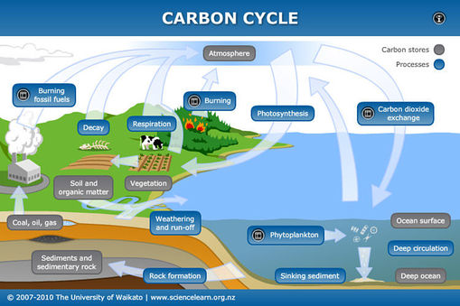 Image credit: http://sciencelearn.org.nz/var/sciencelearn/storage/images/contexts/the-ocean-in-action/sci-media/animations-and-interactives/carbon-cycle/245290-1-eng-NZ/Carbon-cycle_full_size.jpg