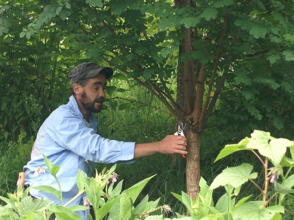 "Sean explaining the concepts of layering in a forest gardening and ""chop and drop"" fertilizing"